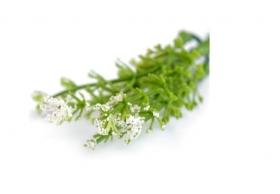 https://scrapkowo.pl/shop,listki-kwiatki-wrzos-biale-5szt-,8635.html