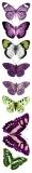 Friday- motyle fioletowo- zielone