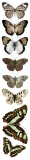 Motyle brązowe