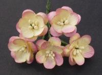 MKX-052 Kwiaty wiśni- odcień różu- ecru 5szt.