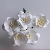 MKX-053 Kwiaty wiśni- odcień biały 5szt.