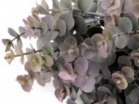 Listki eukaliptusa szarozielone 7szt.