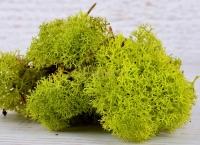 Mech chrobotek 50g zielony