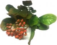 Gałązka z owocami- listki- owoce- pomarańczowe